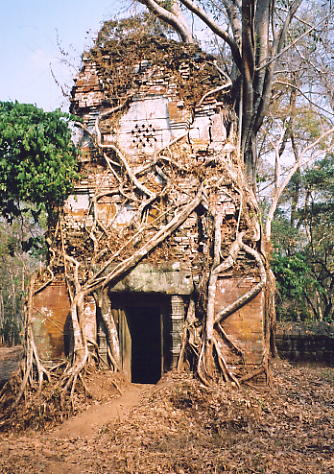 Vines entwine one of the libraries at Prasat Pram.