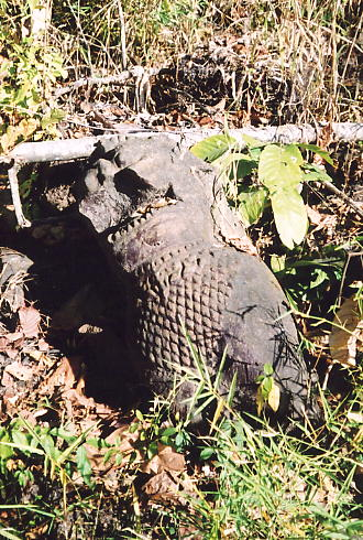 A damaged lion lying in the bush at the entrance to Neak Buos.