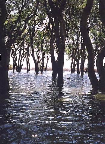 The forest thins out as we approach the Tonle Sap Lake.